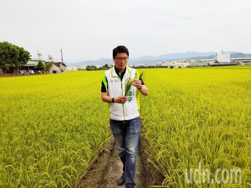 農民向台中市議員林德宇請命,指知名的霧峰香米受寒害,結穗不佳五到八成「空包彈」。記者張明慧/攝影