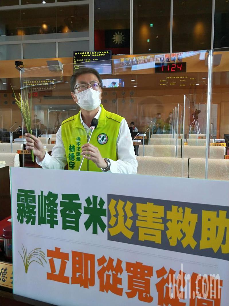 台中市議員林德宇質詢表示知名的霧峰香米受寒害,結穗不佳五到八成「空包彈」。記者張明慧/攝影