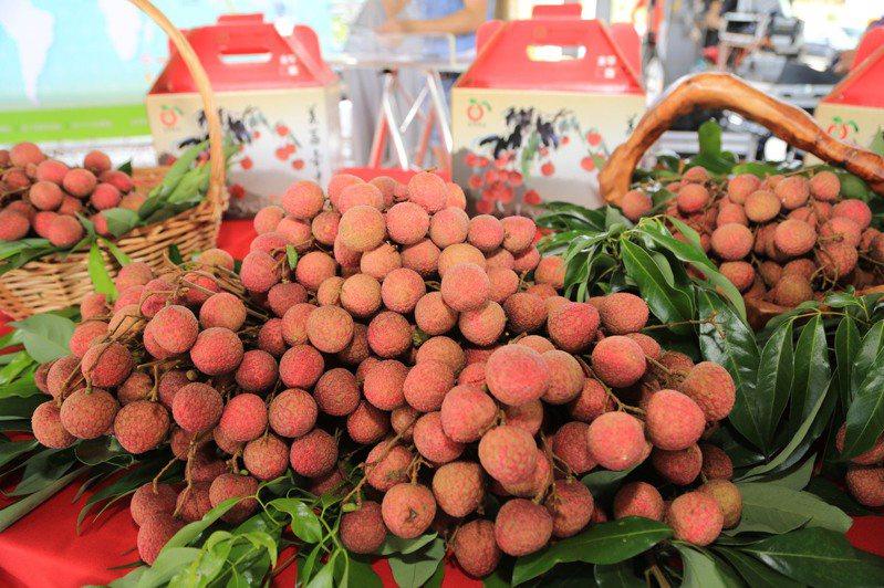 荔枝盛產,但因疫情外銷僅剩馬來西亞1貨櫃,農民憂心貨源回流國內,影響產地報價。圖/台中市府提供