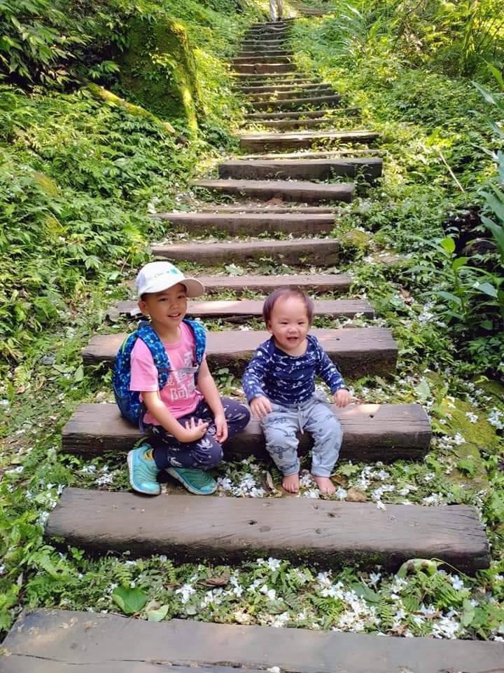 土城桐花公園有多條步道,適合親子半日遊。 圖/布蘭西與三寶的生活旅遊記趣粉絲團提...