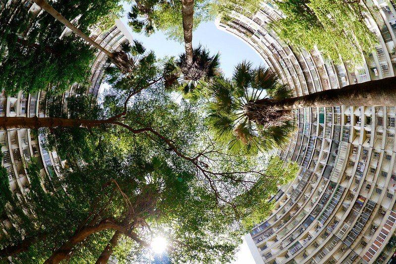 果貿國宅社區,第八、九棟中間社區公園,往天空看上去的風景。