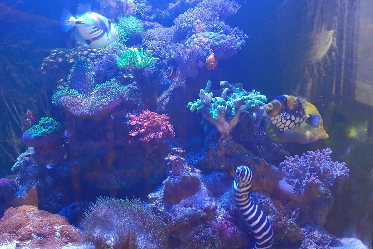 流行時尚/海水魚和珊瑚缸 疫外暴紅