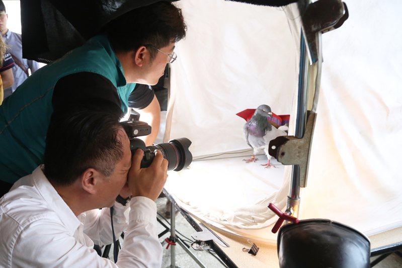 嘉義縣長翁章梁(前)今天體驗高難度鴿笭沙龍照攝影。圖/嘉義縣政府提供