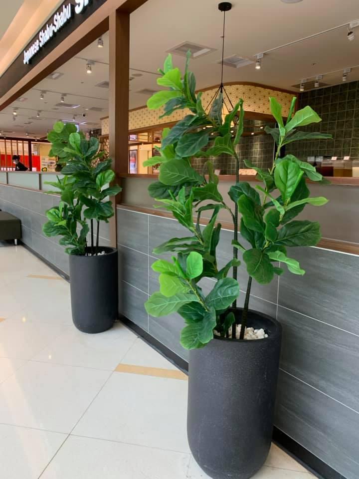 網友工作的店家門口擺了兩棵盆栽。圖/取自爆料公社