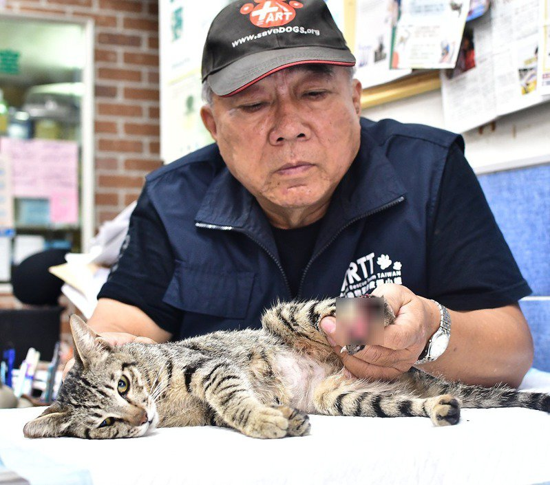 高雄市近期出現數起捕獸夾傷害流浪貓、狗案例,受害動物一臉驚恐。圖/台灣動物緊急救援小組提供
