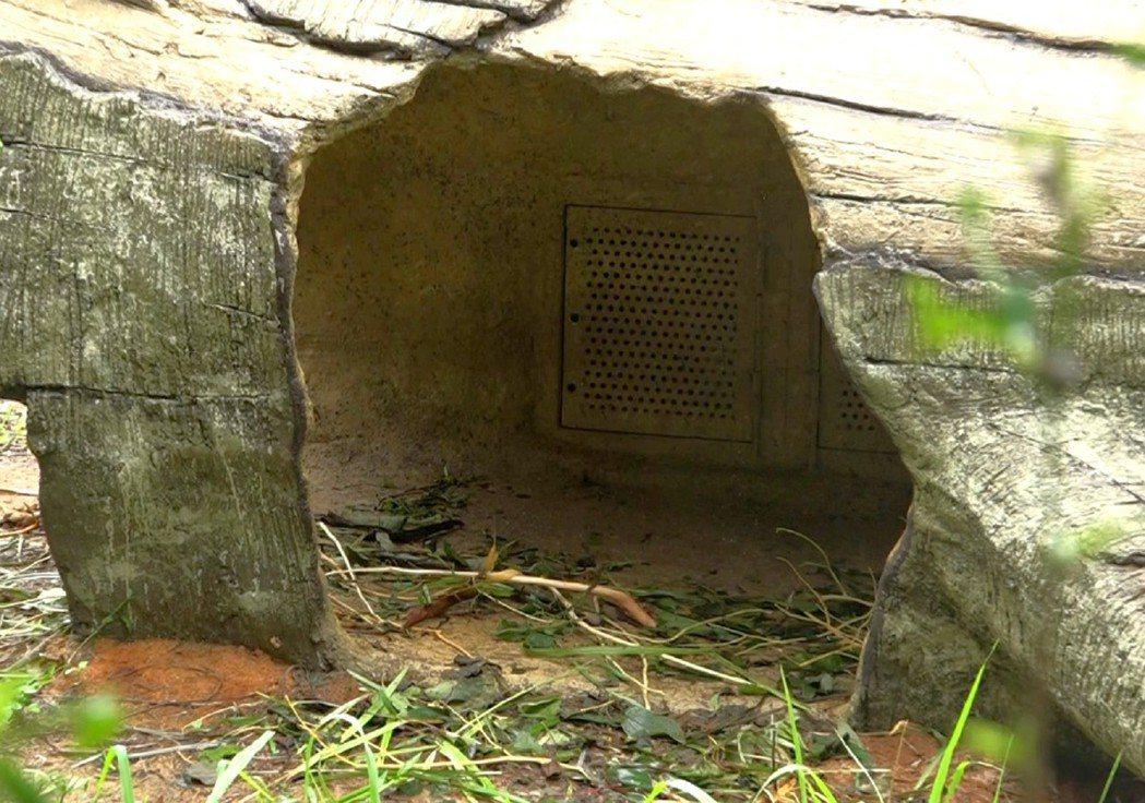 樹洞內藏有給紅毛猩猩對抗寒流來襲時保暖的暖風扇。圖/台北市立動物園提供