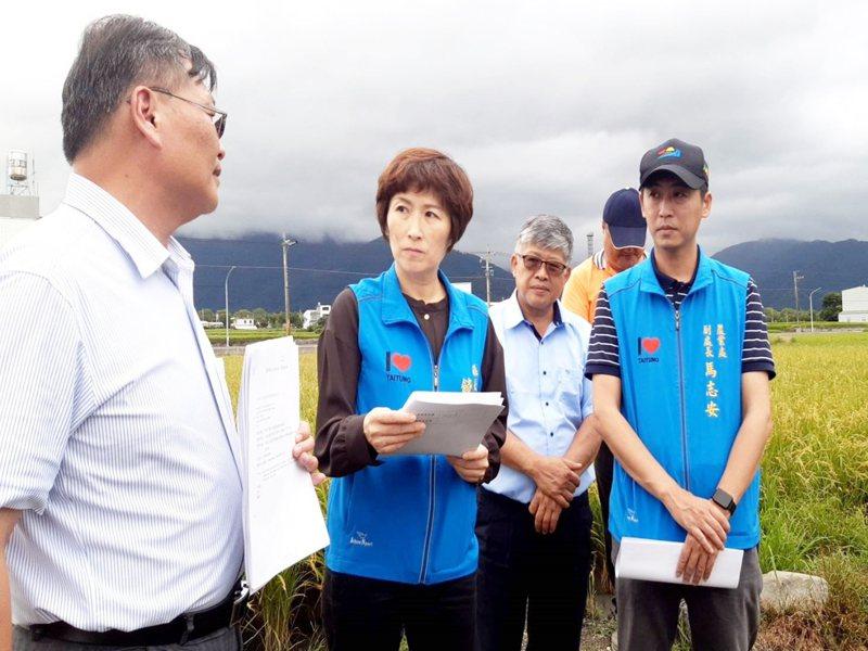今年4月寒害重創台東良質米倉,許多水稻成空包彈,縣長饒慶鈴(左二)今天下午勘災後表示,全力幫農民爭取救助。記者羅紹平/攝影