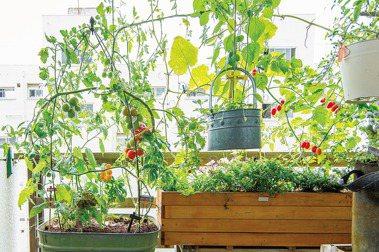 【選讀】日日豐收的混植蔬菜盆栽:12個打造陽台菜園的技巧
