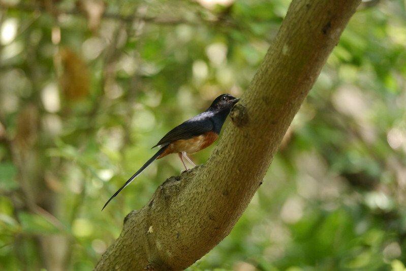 鳥松濕地公園,不知名的鳥