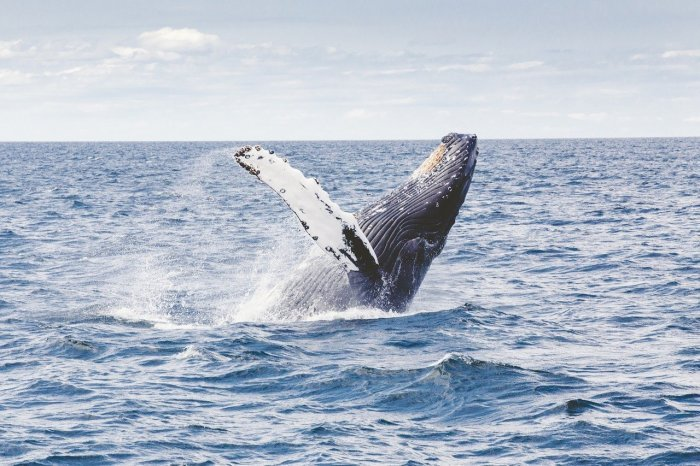 賞鯨。 圖/Pixabay