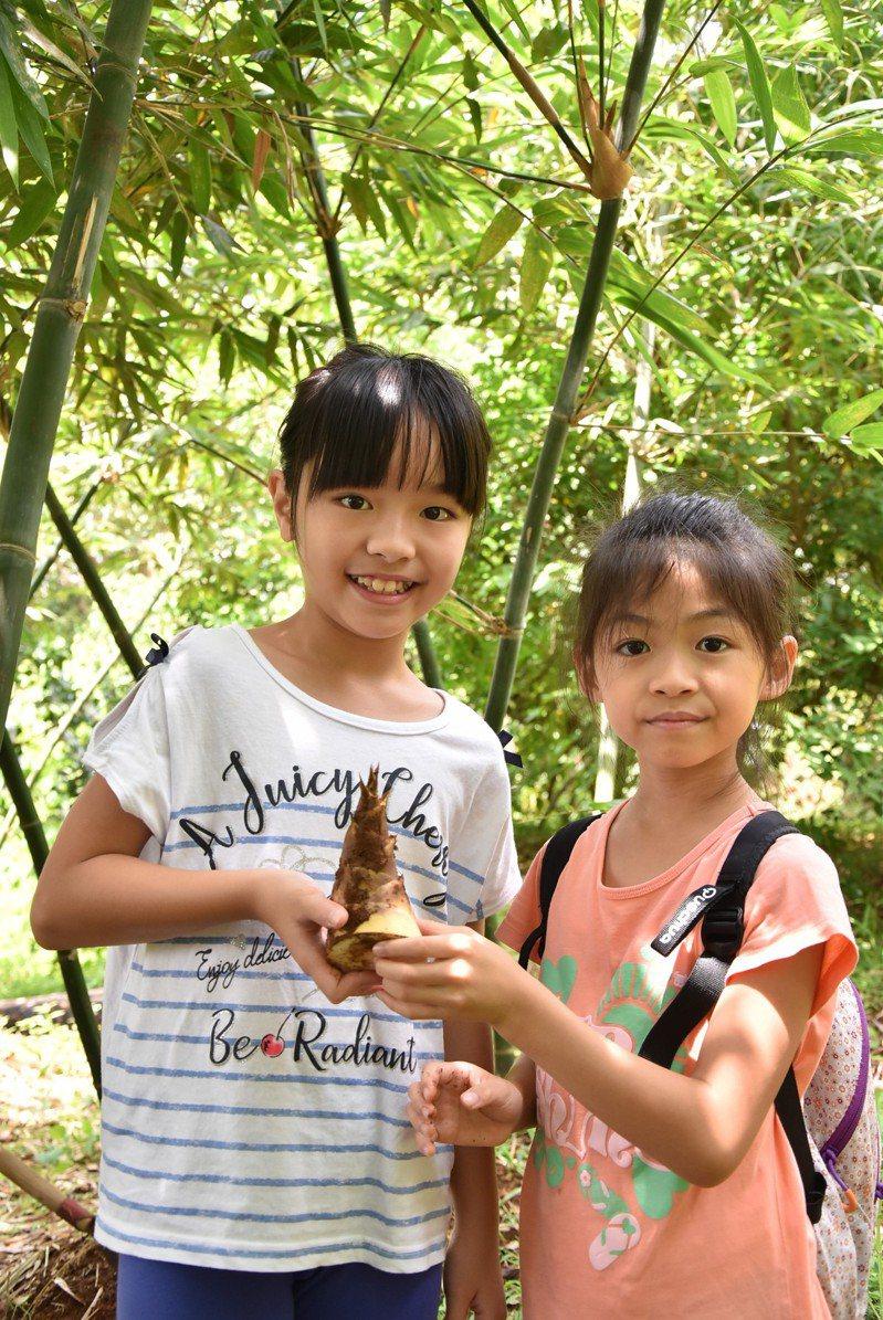 每年6月到9月是台北市綠竹筍盛產期,北市農會每年舉辦綠竹筍季系列活動,除北市綠竹筍品質評鑑比賽,今年6到8月六區農會也舉辦「採筍趣」綠竹筍園一日農夫生態體驗活動共32場次。圖/北市產業局提供