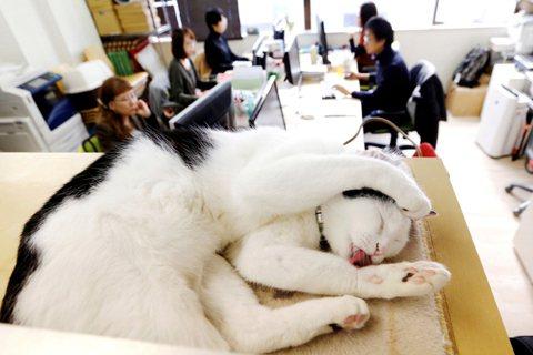 後疫情時代「遠距上班」:焦慮的雇主與失去隱私的員工?