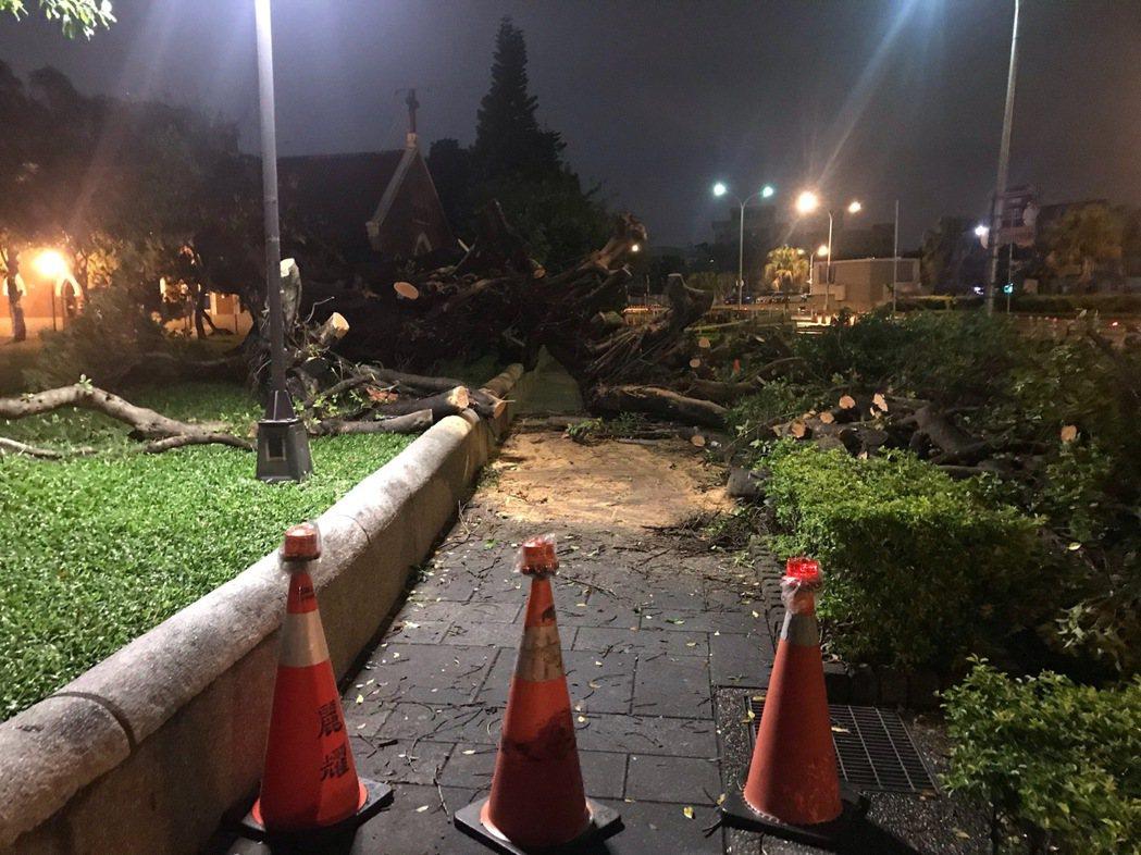 台中公園思恩堂旁的2棵大榕樹昨晚倒塌,橫躺在人行道上,公園派出所昨晚發現後,設置...