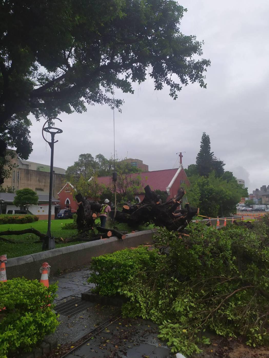台中公園思恩堂旁的2棵大榕樹昨晚倒塌,橫躺在人行道上,建設局今早派員排除。圖/讀...