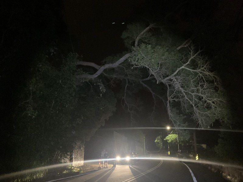 苗栗縣頭份市興隆路一段昨天深夜路樹倒塌壓在電線上,警民合作快速排除。記者范榮達/翻攝