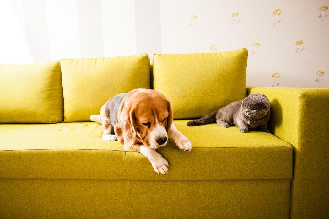 狗狗也會有分離焦慮。示意圖/ingimage 提供