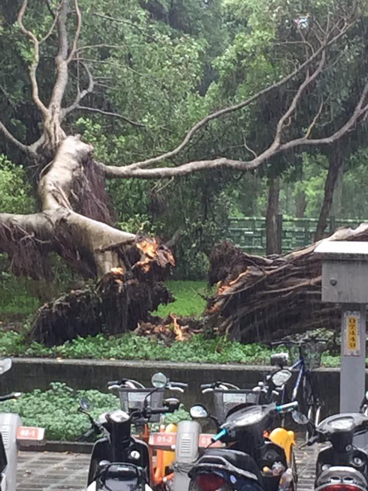 民眾發現中和四號公園有大規模砍樹,里長回應,因為下雨導致樹木突然倒榻。圖/截取自臉書