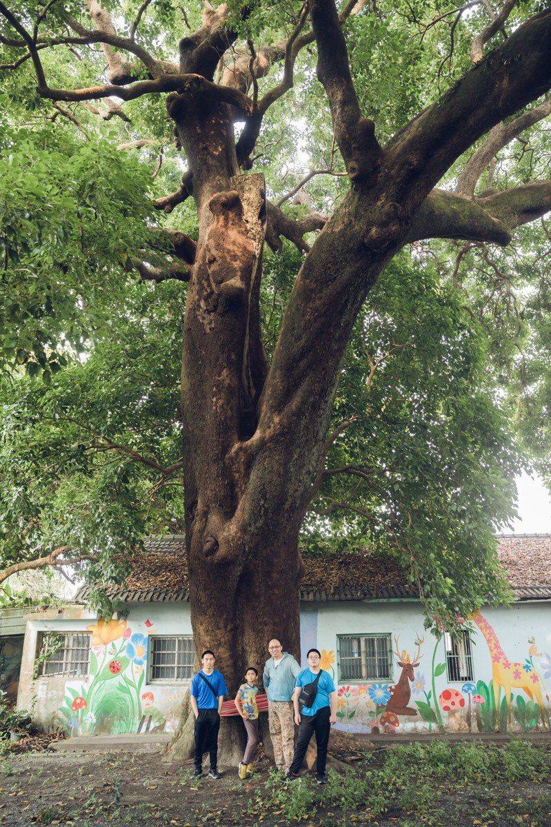 嘉義縣大林鎮三角里有棵老茄苳樹,見證台灣土地歷史變遷,默默地守護大林。圖/江明赫提供