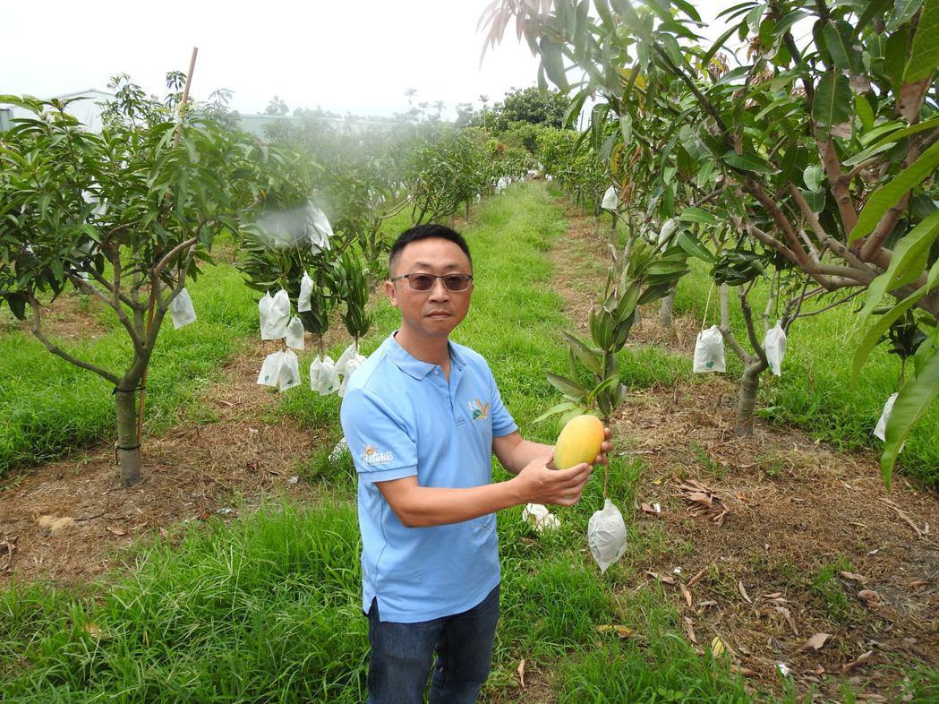 今年2月寒流來襲,造成台東縣境內「改良芒果」出現遲發性災害,已達到現金救助標準。...