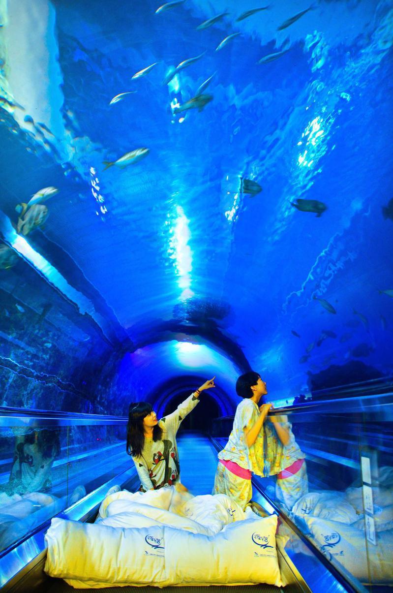 夜宿海生館就寢的海底隧道。(照片提供:海生館)