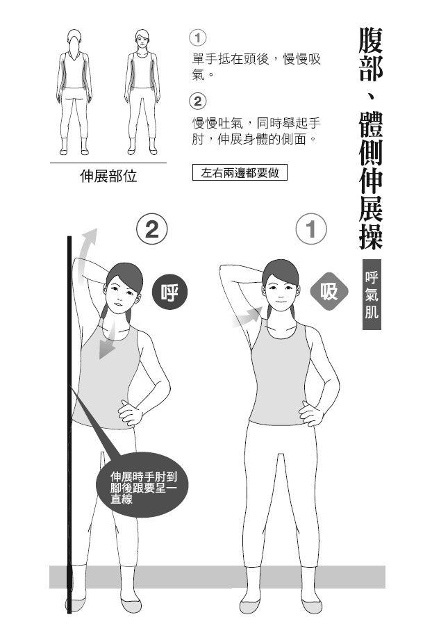 ● 腹部、體側伸展操(呼氣肌) 1. 單手抵在頭後,慢慢吸氣。 2. 慢...