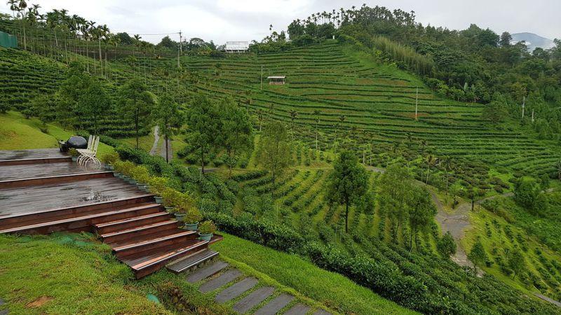 日月潭也是台灣紅茶的故鄉,周邊山坡遍植紅茶可欣賞茶園景觀。圖/日管處提供