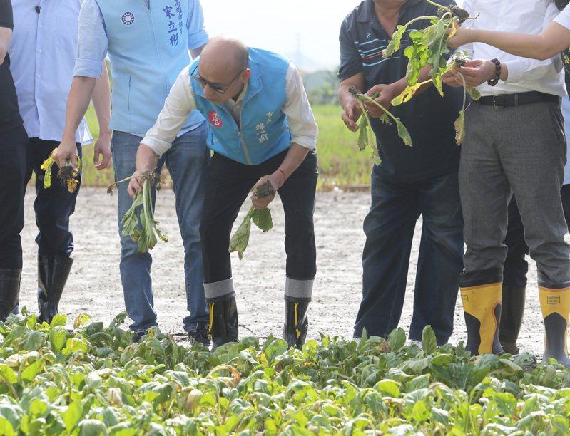 高雄市長韓國瑜上午到梓官查看豪雨過後農損狀況,還親自到滿是泥濘的田裡視察,體恤農民辛苦,韓國瑜也宣布將啟動災害損失補助。記者劉學聖/攝影