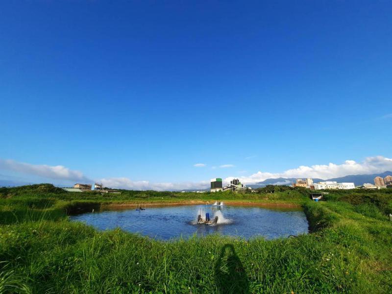 沈姓業者從事水產養殖事業3年,目前飼養340萬隻白蝦,分3個海水池飼養。圖/新北市動保處提供