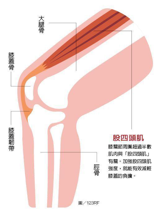 醫師提醒.鍛鍊肌肉與膝蓋關節保養相輔相成,透過運動強化肌肉,尤其是鍛鍊人體最大、最有力的肌肉之一「股四頭肌」,對保護關節最重要。  圖/123RF
