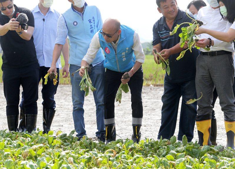 罷韓倒數,高雄市長韓國瑜(中)昨天到滿是泥濘的田裡視察農損。記者劉學聖/攝影