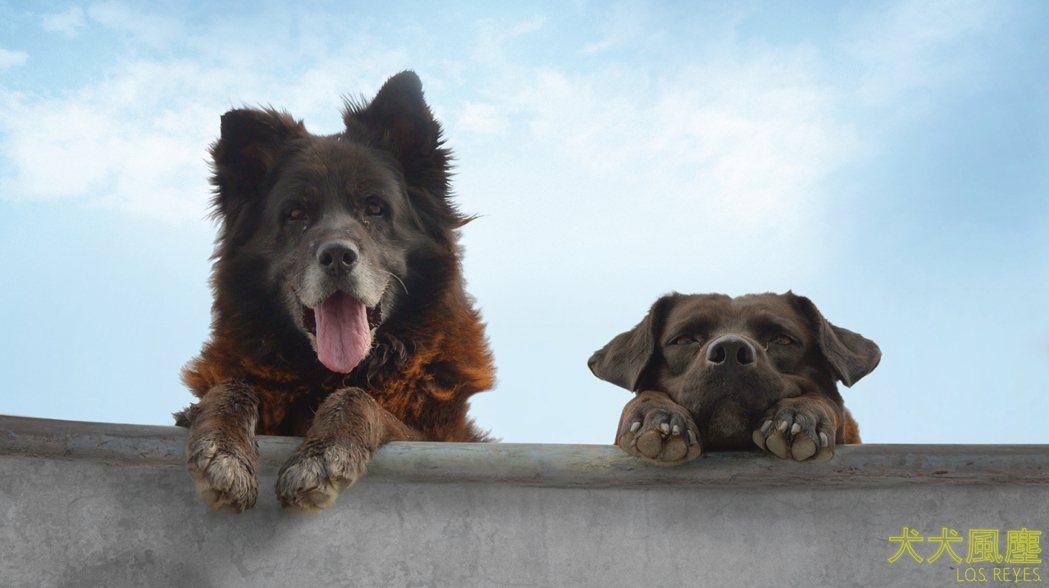 「犬犬風塵」7月3日全台上映。圖/繁盛映畫提供
