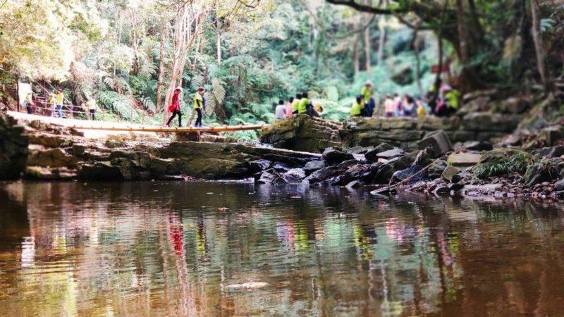 南投魚池澀水社區「水上森林步道」沿途景致多變,還有溪流和瀑布,能呼吸森林芬多精,...
