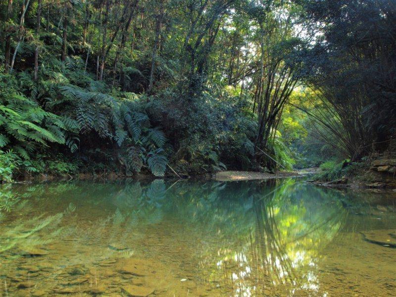 南投魚池澀水社區「水上森林步道」環狀步道景致多變,且酷似侏儸紀時期的原始林,有「...