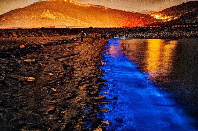 「馬祖藍眼淚」也是大爆發熱門景點,整片藍色螢光海宛如仙境。業者提供