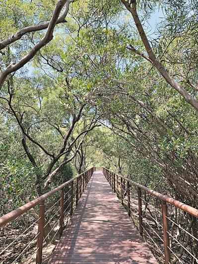 新北市捷運紅樹林站附近有一條500公尺長的生態步道,可沿著進入保育區。 記者魏翊庭/攝影
