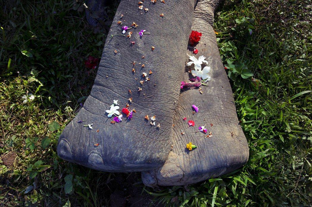 希望這頭曾經信任人類餵食而死亡的母象.還有她肚子裡的小象,去往不再被辜負傷害的樂...