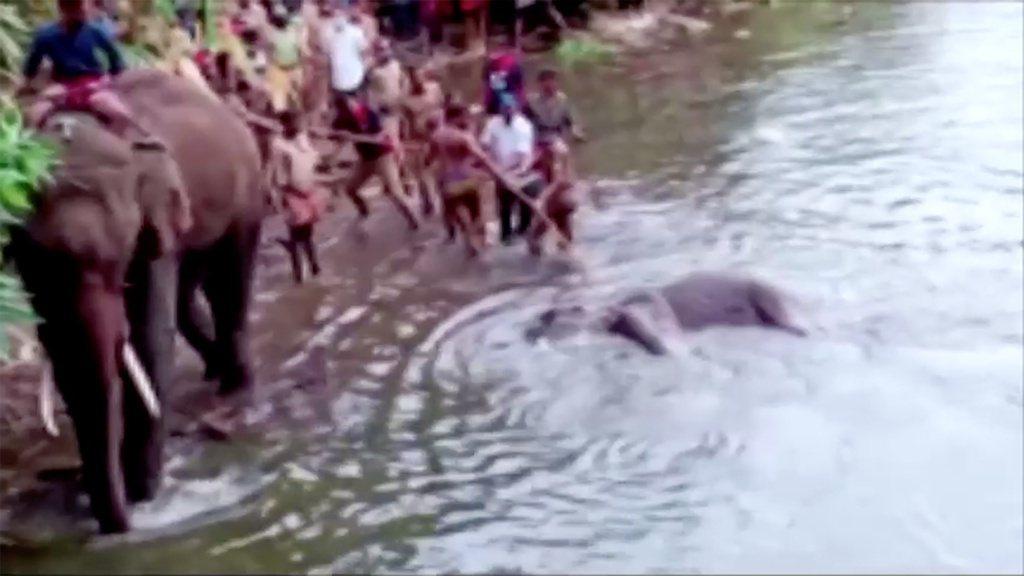 當地村民與當局團隊,試圖用繩索將母象屍體,打撈上岸。 圖/法新社