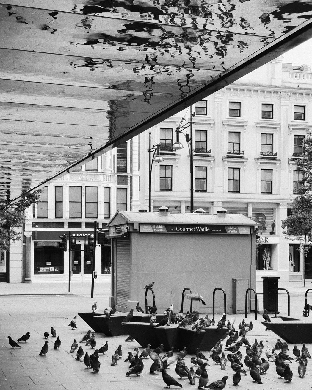 無人的街頭,鴿子大軍悠閒地享受獨占倫敦的滋味。 圖/倫敦男子日常