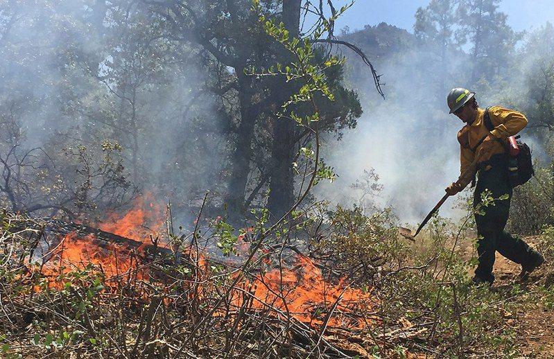 森林野火也是造成珍貴樹林消失的原因之一。(Photo by Prescott NF on Flicker under Creative Commons license)