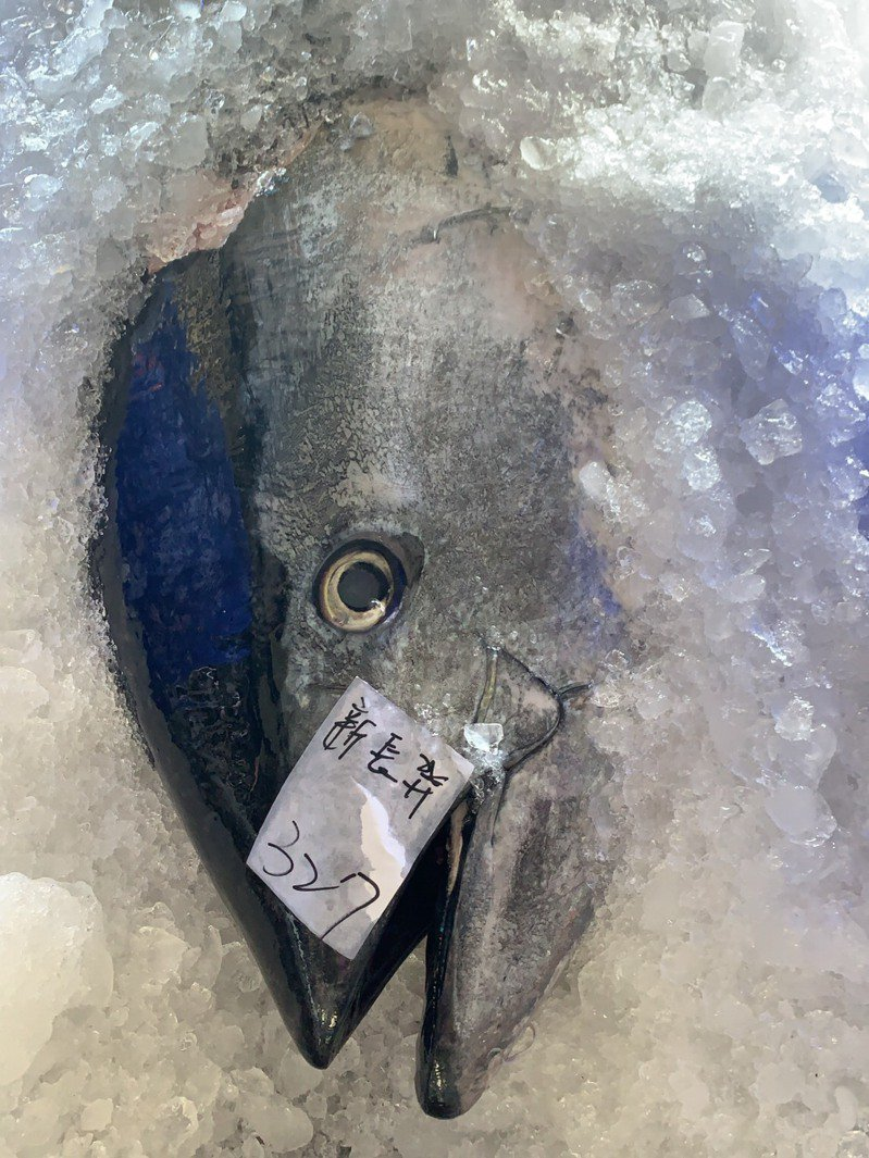成功鎮新港區漁會表示,今年潮流好,黑鮪魚捕獲數量增加。記者尤聰光/翻攝