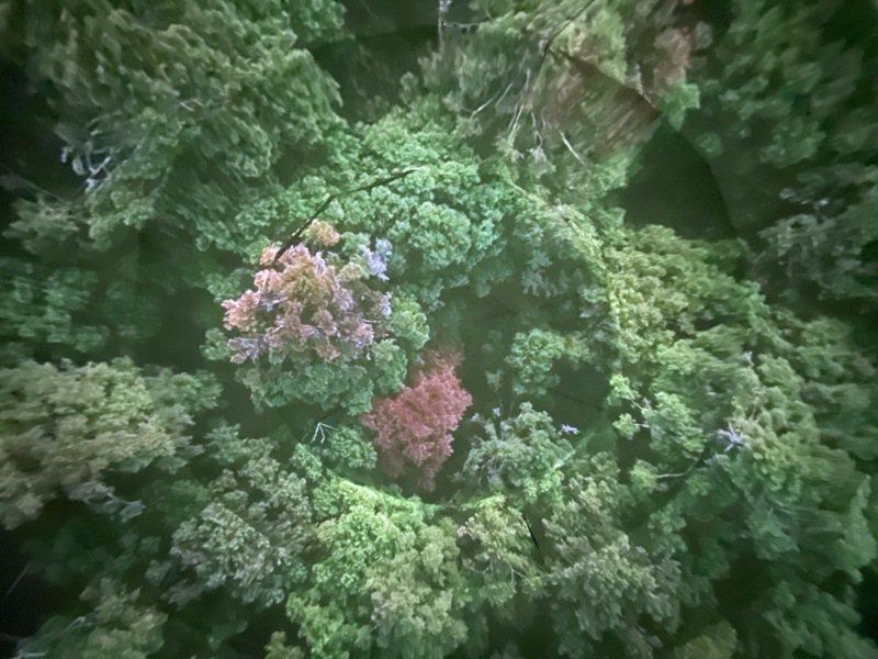 走進圓球帳篷內部,觀賞360度影像播放,躺在懶人沙發仰望欣賞阿里山森林守護故事,以及法國、加拿大、阿根廷等新型態藝術影片創作。圖/嘉義縣文化基金會提供