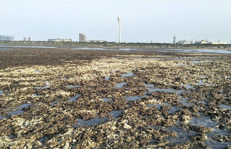 大潭藻礁。圖/報系資料照