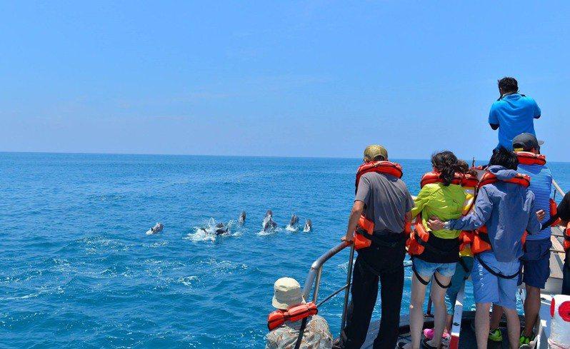 6月至10月是到東台灣觀賞鯨豚生態的好時機,海保署鼓勵國人多走出戶外。圖/海洋委員會提供