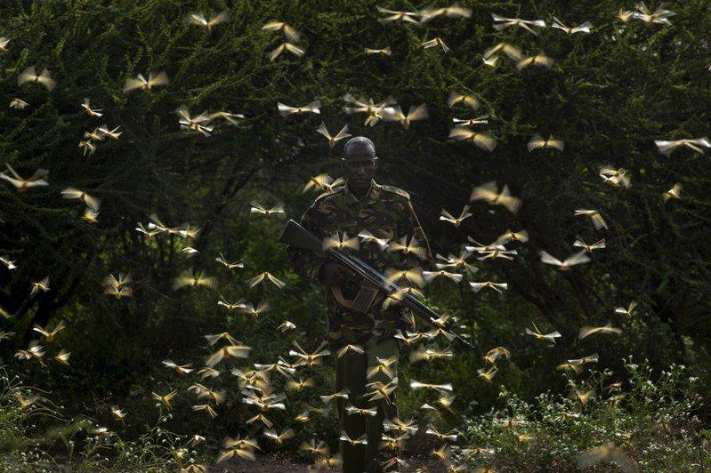 氣象學家指出,未來幾天的天氣將決定蝗蟲雲是否入侵巴西。圖/美聯社
