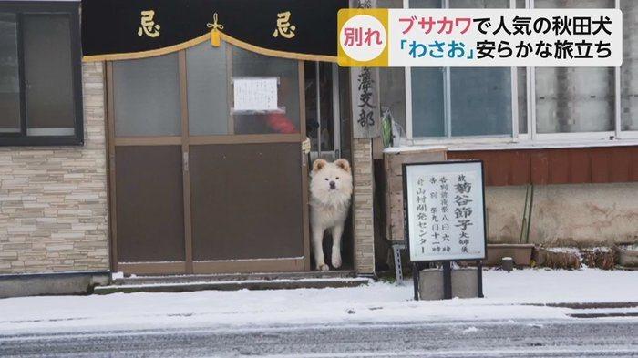 圖/擷自fnn.jp。