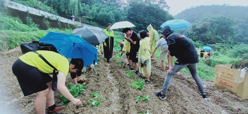 參與「種地瓜送愛心」活動民眾不畏風雨種植甘藷。圖/新北市農業局提供