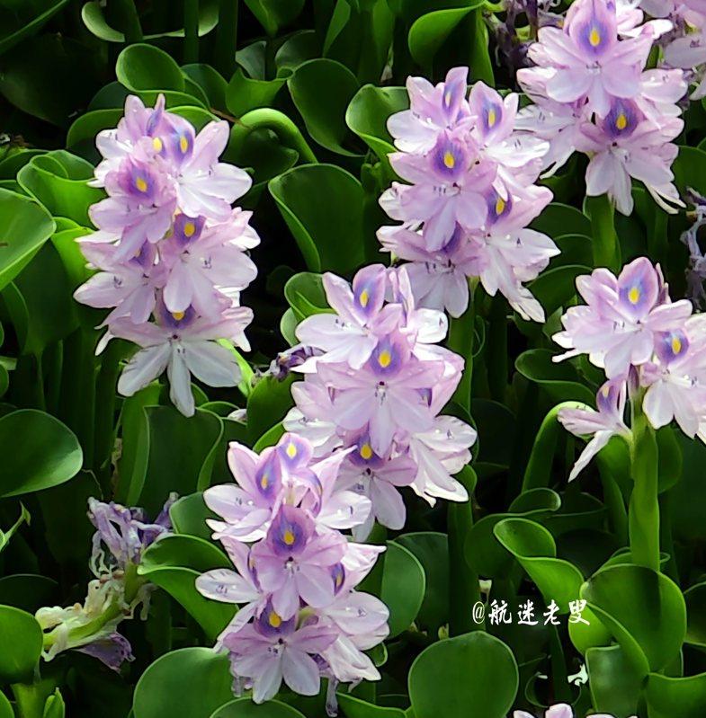 在2020年出門賞花、拍花,變得很奢侈,看到美麗的花在田野上綻放,心情大好,縱向構圖使花卉有伸展的空間,能夠更好地展現花卉的魅力,手機觀看也更為方便。