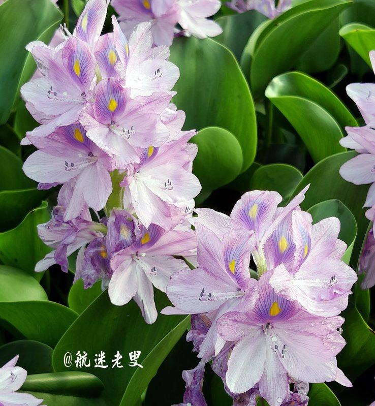 要拍好看的花,蹲下來,與它近距離的相對,一定要趴下,趴下,趴下!一定要圍著轉,圍著轉,圍著轉!一定要等,要等,要等!