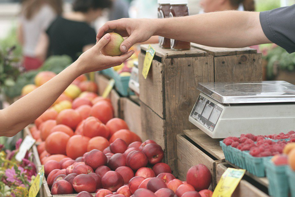 一旦長時間只吃單一或是兩三種水果,極容易出現營養失衡的情況,進而使減肥計劃破功 ...