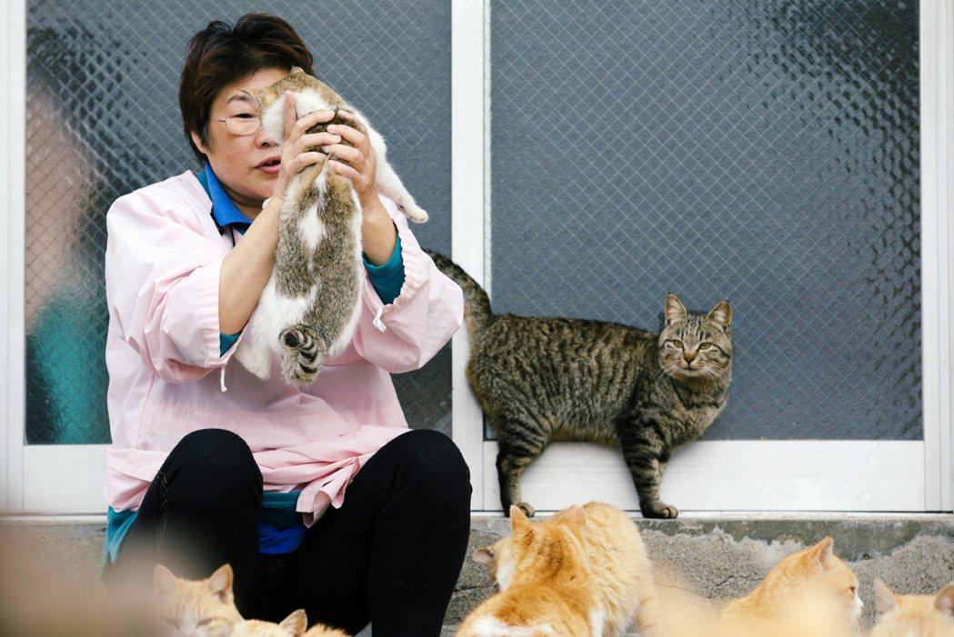 圖為貓島之一的青島,島上的人貓互動。 圖/路透社
